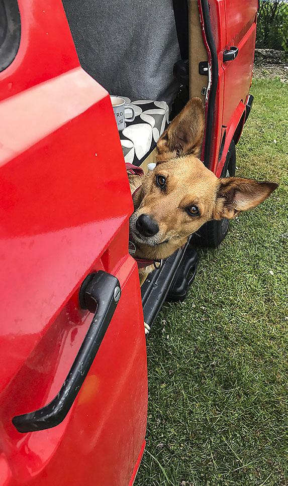 Auch der Hund fühlt sich im VW Bus T3 wohl.